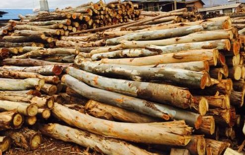 马来西亚进口木材正式入库泸州保税中心风速表